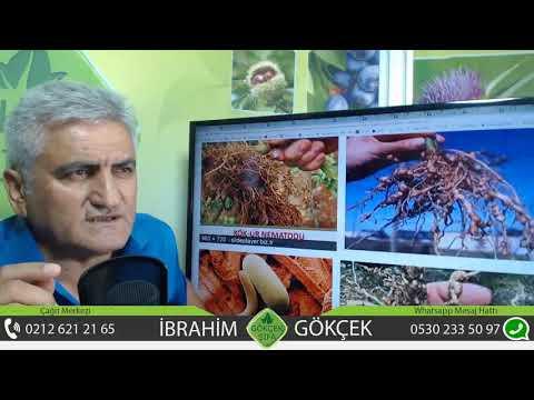 Medicamente moderne pentru viermi pentru adulți
