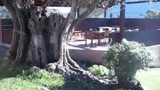 Video del alojamiento El Solei