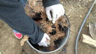 Green's DIY cremation and how to