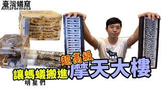讓螞蟻住進「摩天大樓」|私人打造超高超美的巢|【臺灣蟻窟】