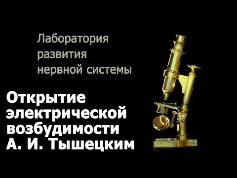Открытие электрической возбудимости А. И. Тышецким