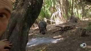 Hippo Encounter | Marooned
