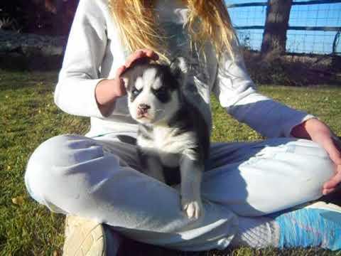 layka at 3 weeks of age
