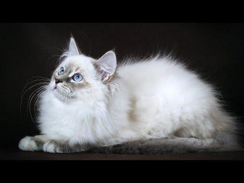 Ежедневная причёска котика Марсика / Удивительное, смешное видео! / Amazing cat!