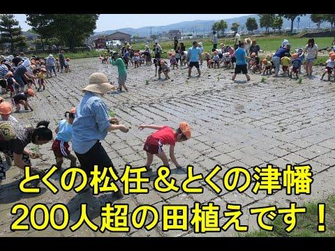とくの松任&とくの津幡幼稚園の田植えは200人超であっ言う間です・2017