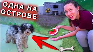 A HOMELESS DOG ON THE SPIRIT ISLAND. Save from Hunger | Elli di pets