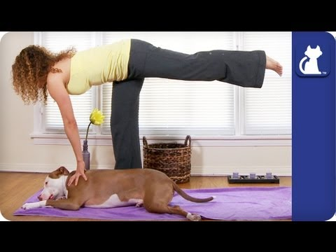 Warrior Poses With Your Dog - Yoga With Your Dog