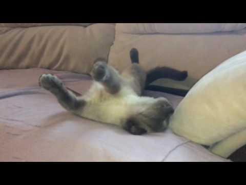 Кот летает во сне