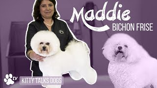 Kitty Talks Dogs: grooming Maddie the Bichon Frisé | TRANSGROOM