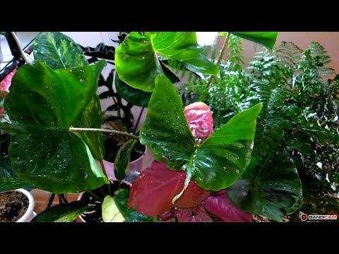 Обзор моих цветочков на стеллаже (часть 1)