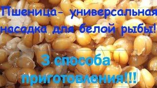 Молотая пшеница на прикормку