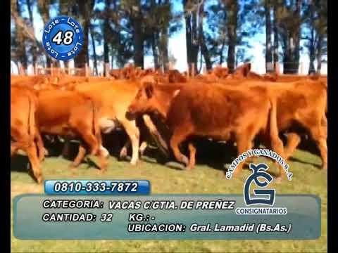 Lote VC CGP - Gral Lamadrid