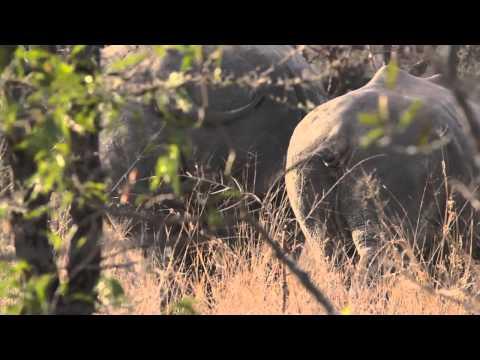 South Africa Royal Malewane - Elephant - Elephant Tube