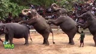 Elephants Dance At Dehiwala National Zoo (Sri Lanka)