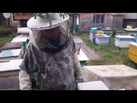 Сокращение пчелосемей в зиму перед закормкой.
