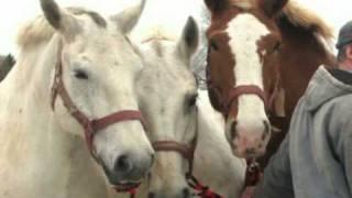 Mackinac Island Horses Arrive