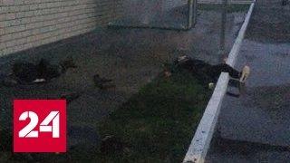 Боевики пытались прорваться на территорию войсковой части Росгвардии в Чечне
