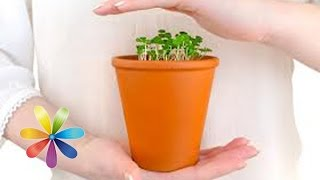 Как пересаживать растения правильно видео