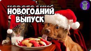НОВОГОДНИЙ ВЫПУСК   Ананас TV   # 35