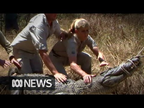 Steve Irwin's family slamming new rules allowing crocodile eggs to be stolen and used to breed and skin crocs.