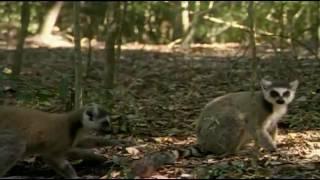 Природа Африки и Мадагаскара
