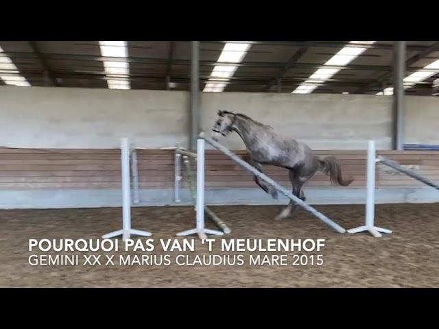 Pourquoi Pas van het Meulenhof loose jumping