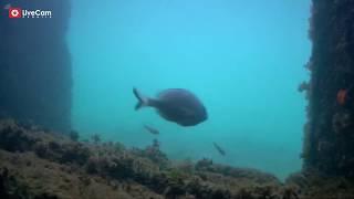 Nacionalni park Brijuni - podvodna kamera