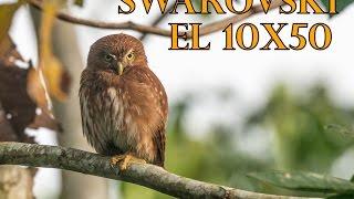 Swarovski EL 10x50 vs. Zeiss & Leica