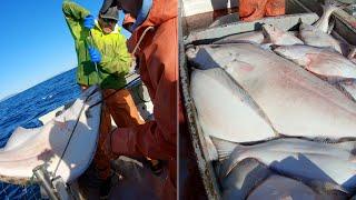 Here Comes a Big One! - Alaska Halibut Longlining