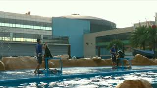 Sea Lion Show at Manila Ocean Park (before covid-19)