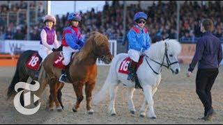 Shetland Pony Grand National | Op-Docs | The New York Times