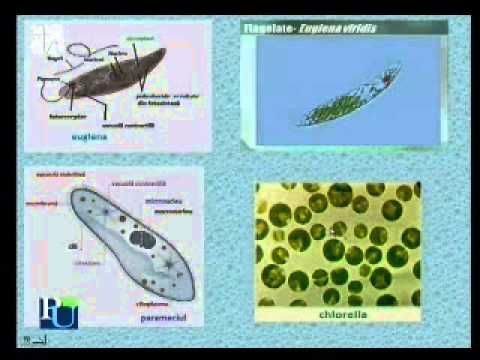 Virus papiloma en pie