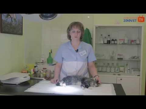 Мочекаменная болезнь кошек