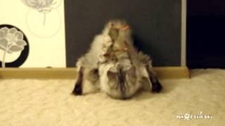 Сats never changes / Кот есть кот - Video Youtube