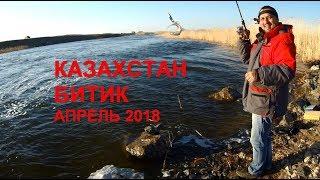 Рыбалка на кировском водохранилище казахстан