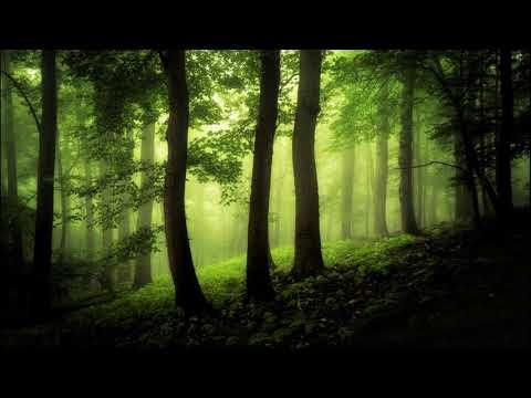 Vilkas - Magic Fog