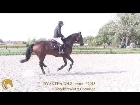 Zangersheide   6 ans   Donckervoort DH x Coronado