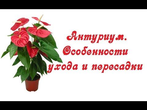 Фото с надписью очень красивые счастья вам