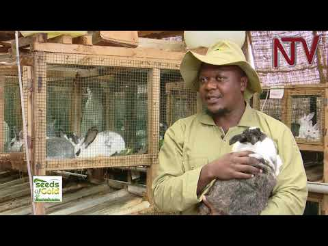 SEEDS OF GOLD: So you want to start a rabbit farm? Here is a guide