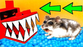 🐹Dragon Hamster Maze with Traps 😱OBSTACLE COURSE😱
