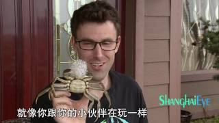 The secret of the HAIRY CRAB!