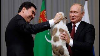 Верный алабай: Бердымухамедов подарил Путину собаку