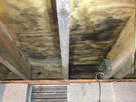 This Midlothian, VA crawl space had some serious mold issues on the joists and subfloor. Check out how we killed and removed the mold with Mold-X2!