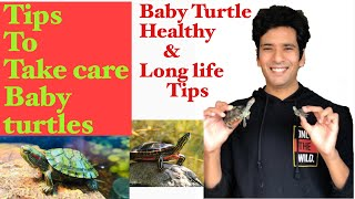How to take care of baby RED EARED SLIDER| Baby turtle care tips| Indian Turtle aquarium
