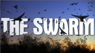 ShellShocked Featured in Latest Episode of Louisiana Wetlands: The Swarm