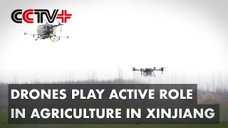 Drones Play Active Role in Agriculture in Xinjiang