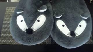 Нежные пушистые домашние мышки female mice Gentle fluffy