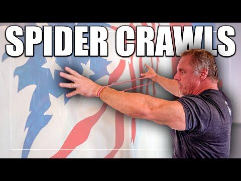 Banded Shoulder Spider Crawls