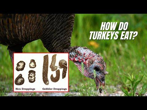 , title : 'Turkey Anatomy!  How Turkeys eat & how TURKEY GIZZARDS WORK!