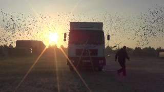 preview picture of video 'Hannover-Laatzen 2 01.06.2014 g. 5.55 start gołębi Oddziału 0248 Brzeg'